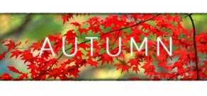 Autumn фото
